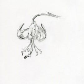 study_flower3