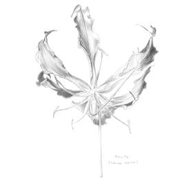 study_flower_low
